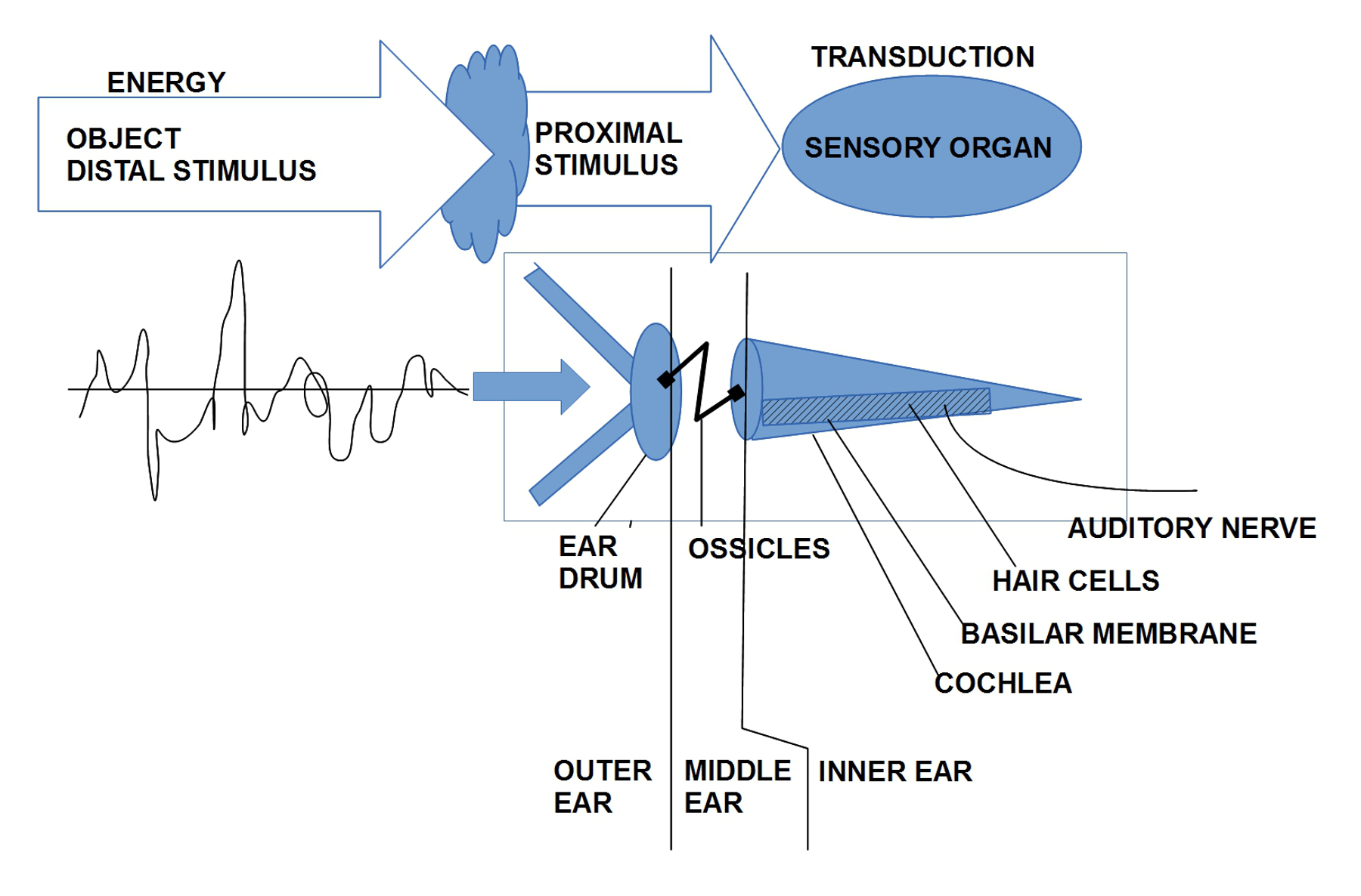 Skizze zur Übersetzung ('transduction') Energieereignissen im Kontext von von empirischen Ereignisquellen in neuronale Ereignisse. Am Beispiel des Ohres kann man ca. 6 verschiedene Übersetzungsprozesse unterscheiden, die alle hintereinander geschaltet sind