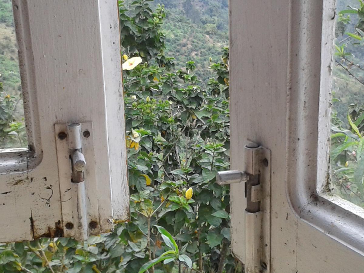 Blick aus dem Fenster eines Kaffeeplantagenhauses auf die Hänge der Blue Mountains; dazwischen die Kaffeepflanzen