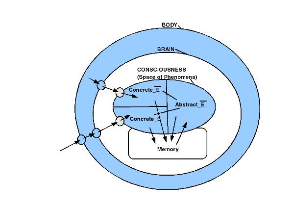 Bild 2: Gehirn im Körper mit Raum der Phänomene. Empirische und nicht-empirische Phänomene