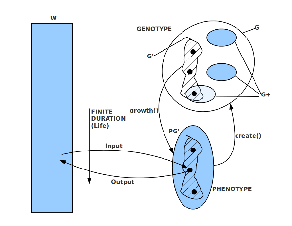 Bild 7: Biologischer Reproduktion als Quelle der Kreativität für neue Strukturen